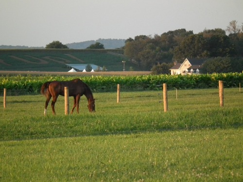 Field_with_horse
